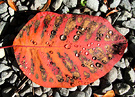 Striped Autumn Leaf