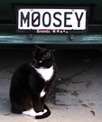 Moosey Cat Black